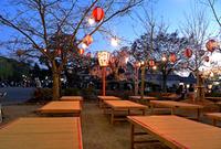 20110406194757maruyama006